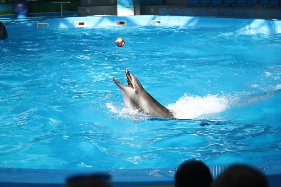 Блог о сексе с дельфинами
