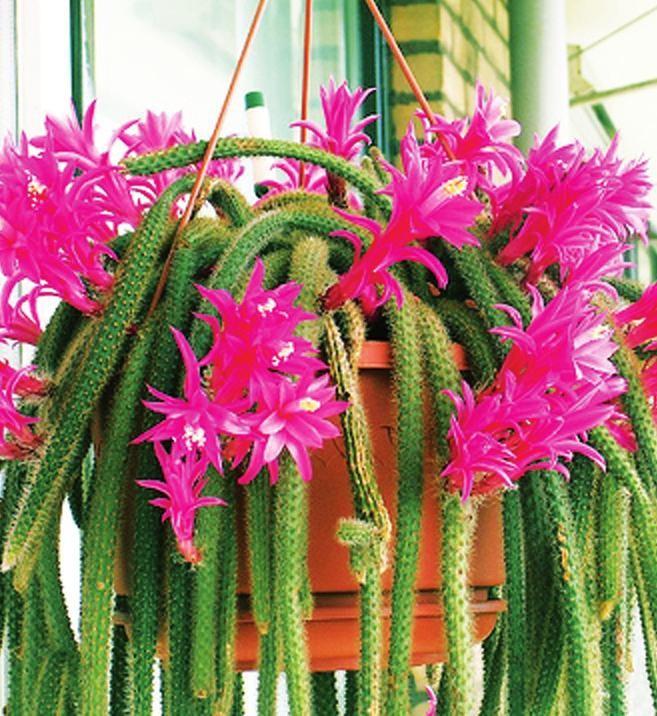 комнатные цветы уход за ними фото и название